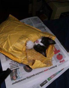 chaton envelopppe