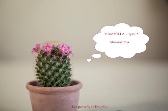 Depuis qu'il se prend pour une star, Doudou ne croit plus être un simple cactus !
